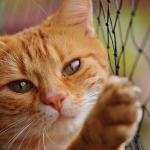 寄生虫のいるセミを猫が食べても大丈夫?