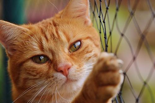 セミ 寄生虫 猫