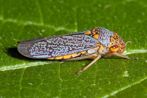 セミ 幼虫 成虫 食べ物
