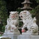 大阪と沖縄ではセミの種類や鳴く時期は違う?