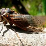 蝉は土の中で何年過ごす?食べ物や潜っている深さはどのくらい?