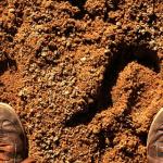 セミはなぜ幼虫の期間が長いのでしょうか?