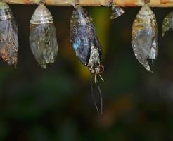 セミ 卵 孵化