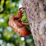 セミの幼虫の捕まえ方の基本は、夕方の時間を狙って探してみよう