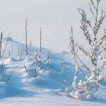 冬と地震はセミに関係あるのか
