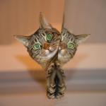 猫はセミを食べても大丈夫?