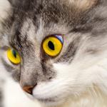 猫がセミを持ってきて見せるのは何故?