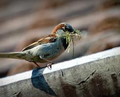 ③ 蝉 食べる 鳥