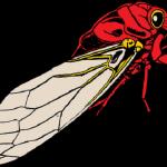 関東に生息する蝉の種類と発生時期について
