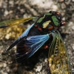沢山いる蝉の種類、名前の由来とは