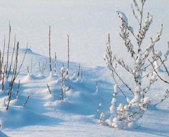 冬 セミ 地震