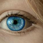 蝉の目は見えない赤い目を含めて5つある