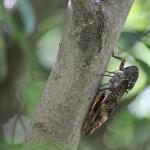 アブラムシの幼虫が住んでる場所や捕まえ方