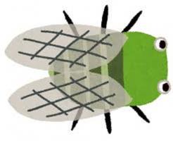 ミンミンゼミ 幼虫 期間